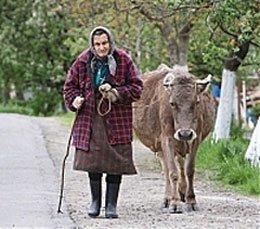 В последнее время в селе коров держат, в основном, старики.