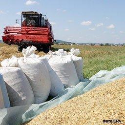 Евросоюз: продавцы пшеницы предпочитают не торопиться с продажами