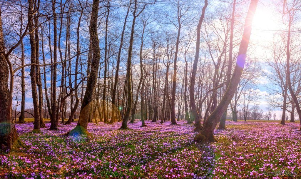 Закарпатье весна март2019 первоцветы