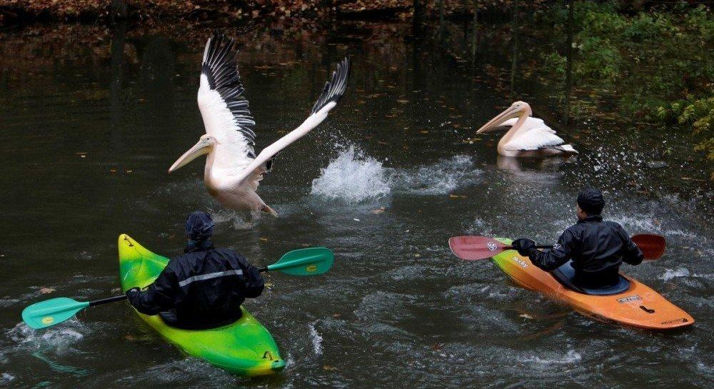 Птахи зовсім не хотіли добровільно переміщатися до теплих вольєрів