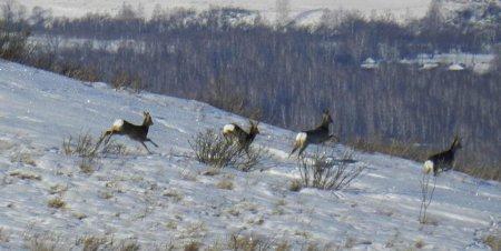 Площа мисливських угідь в Закарпатській області складає 1 068943 га.