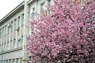 В Ужгороді додалося зелені та усілякого цвіту
