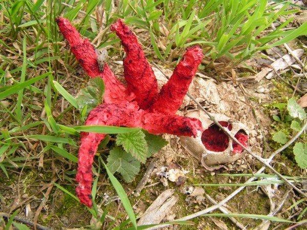 """Еще их называют """"пальцами дьявола"""", а официально - цветохвостником Арчера"""