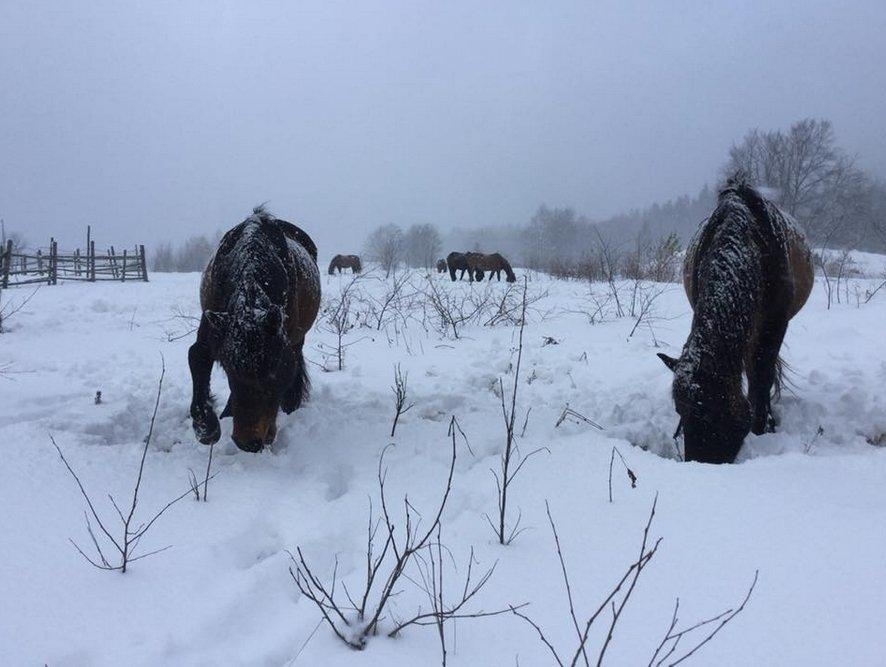 Зимові гори Закарпаття саме для справжніх верховинських гуцуликів