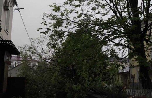 Буревій із дощем пронісся по Закарпаттю — наслідки плачевні