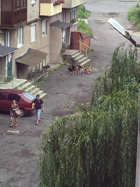 """Бездомные собаки в ужгородском микрорайоне """"Шахта"""""""