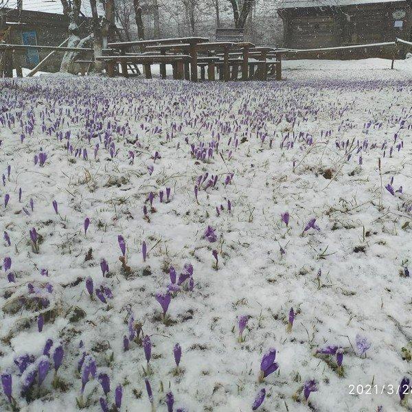 На конце марта Закарпатье засыпало снегом