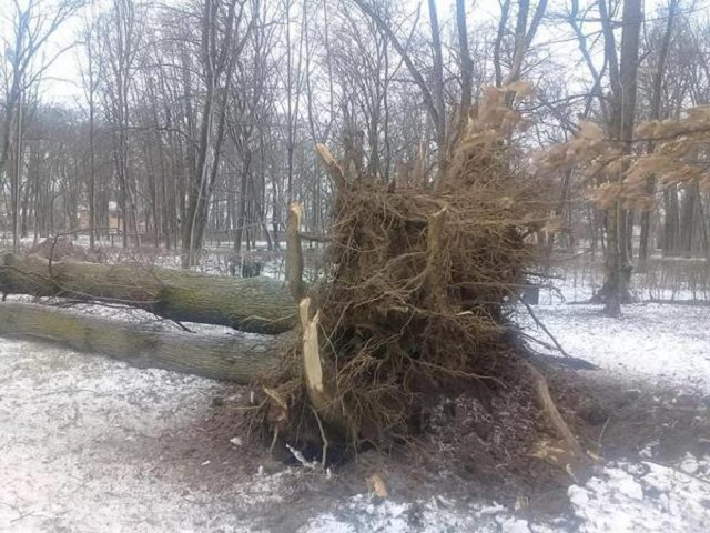 В Закарпатье ураганный ветер натворил беды