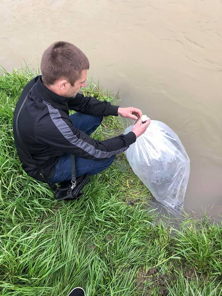 В Закарпатье в водоемы заселили редкую рыбу из Красной книги