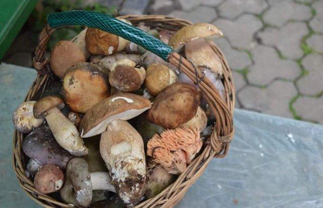 Закарпатье поражает богатым предложением грибов на местных рынках — на любой вкус! (ФОТО)