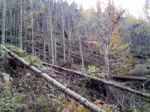 У «Брустурянському ЛМГ» підраховуються збитки, заподіяні стихією