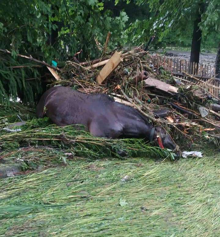 В Закарпатье без вести исчез местный житель, спасая коня: Родные не надеются найти его живого