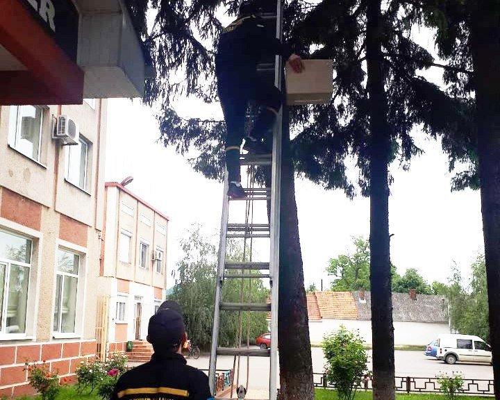 В Закарпатье очевидцы попросили спецслужбу спасти двух животных
