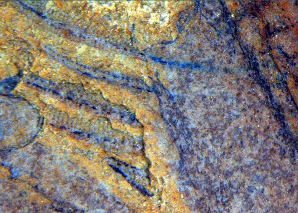 В Китае археологи откопали существо, которому сотни миллионов лет