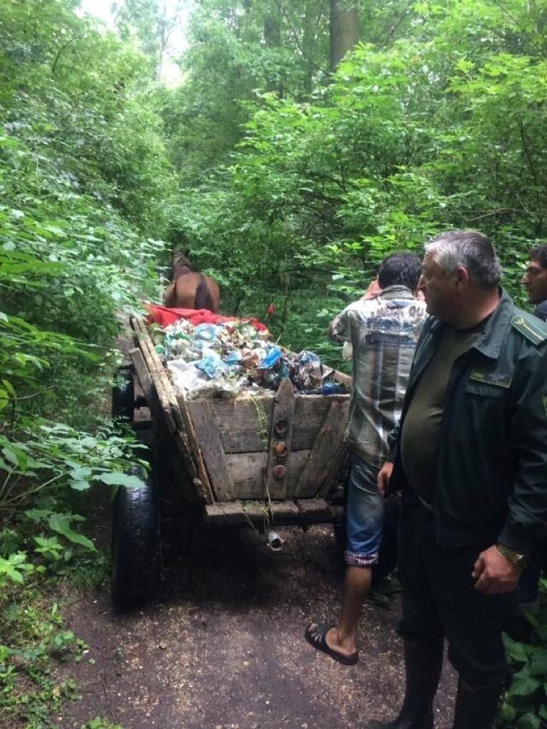 В лесах Закарпатья должно быть чисто и опрятно