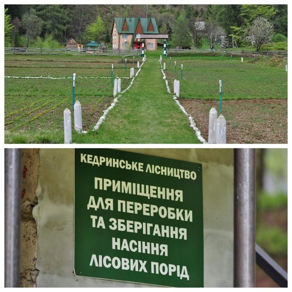 Кедринское лесничество на Закарпатье