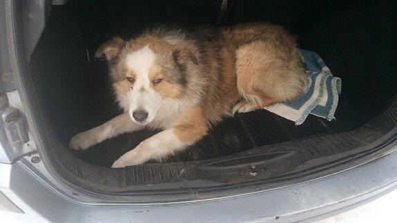 «Помоги другу» получили награду за спасние собак на ж/д в Закарпатье