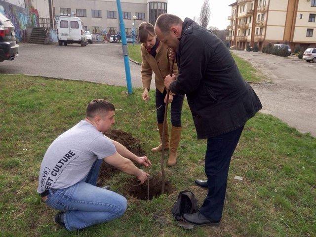 В Ужгороде высадили аллею гинкго билоба