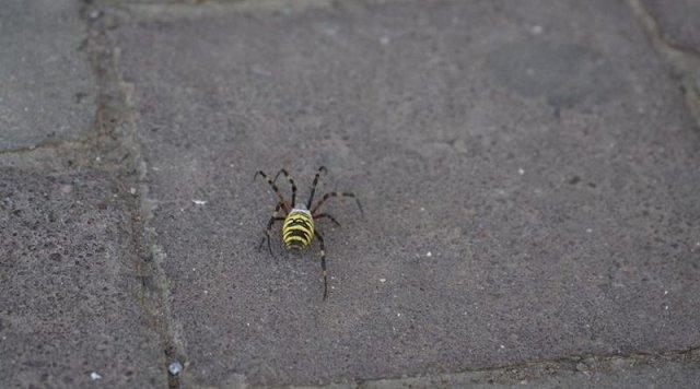 В Закарпатье заметили опасных пауков
