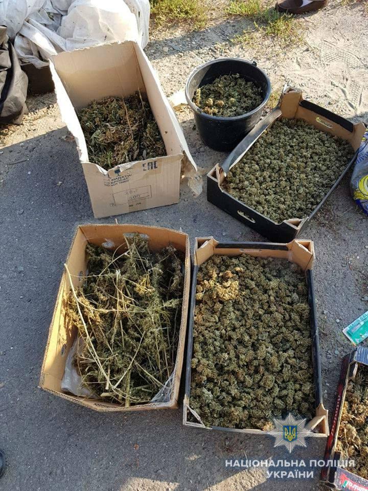 В Ужгородському районі знайшли сховок з марихуаною на 39 мільйонів гривень