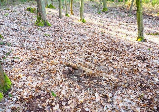 Приятный сюрприз!: В Чехии пара туристов нашла в лесу редчайший клад XIV в. (ФОТО)