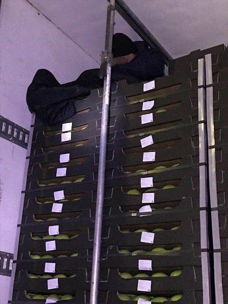 В грузовике с яблоками на Закарпатье обнаружили юного нелегала