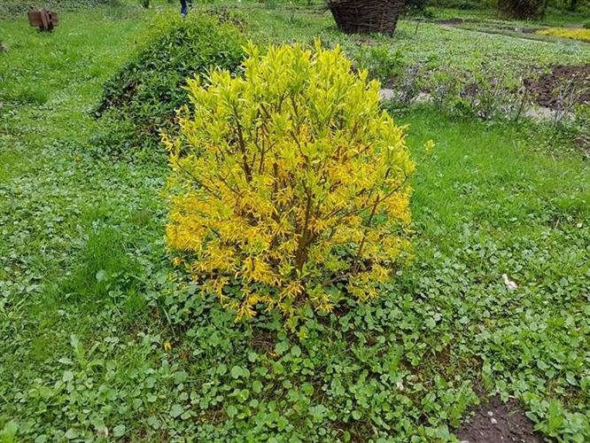 У ботанічному саду УжНУ — квітковий бум!