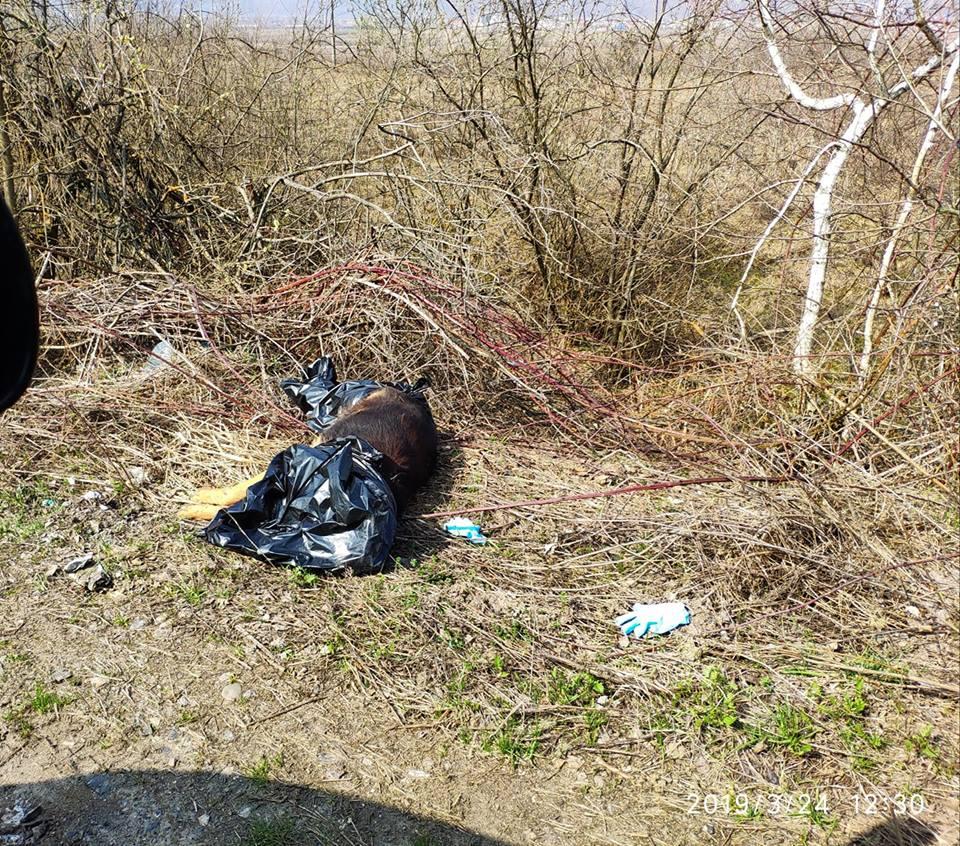 В Закарпатье труп бедолаги выбросили будто ненужный хлам