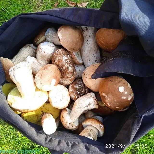Белый гриб гигантских размеров умудрились найти под Ужгородом