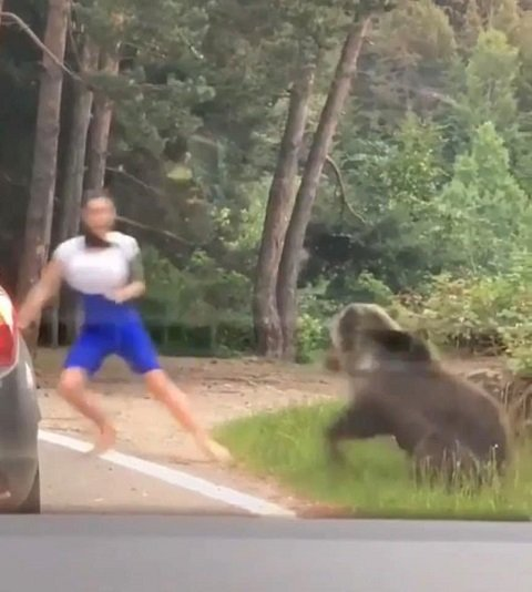В соседней с Закарпатьем Румынии медведи нападают на людей