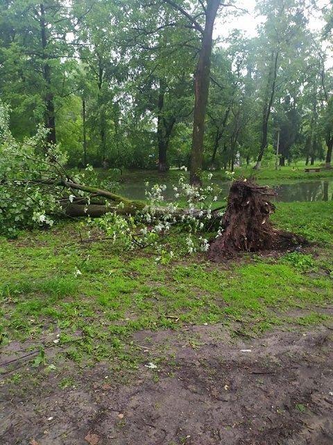 В Закарпатье прошел сильный ливень с градом: Ветер выворачивал деревья с корнями