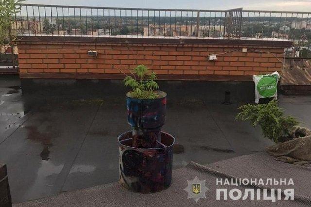 """""""Пентхаус"""", лежаки и конопля: Житель Тернополя устроил себе красивую жизнь"""