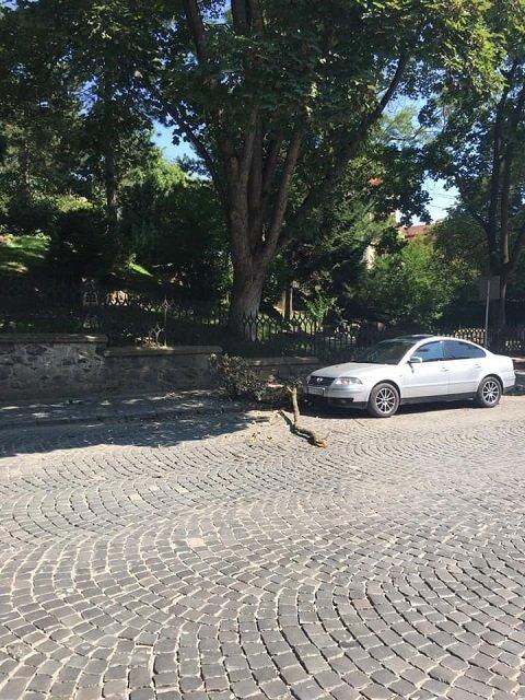 В центре Ужгорода на тротуар рухнула гигантская ветка дерева