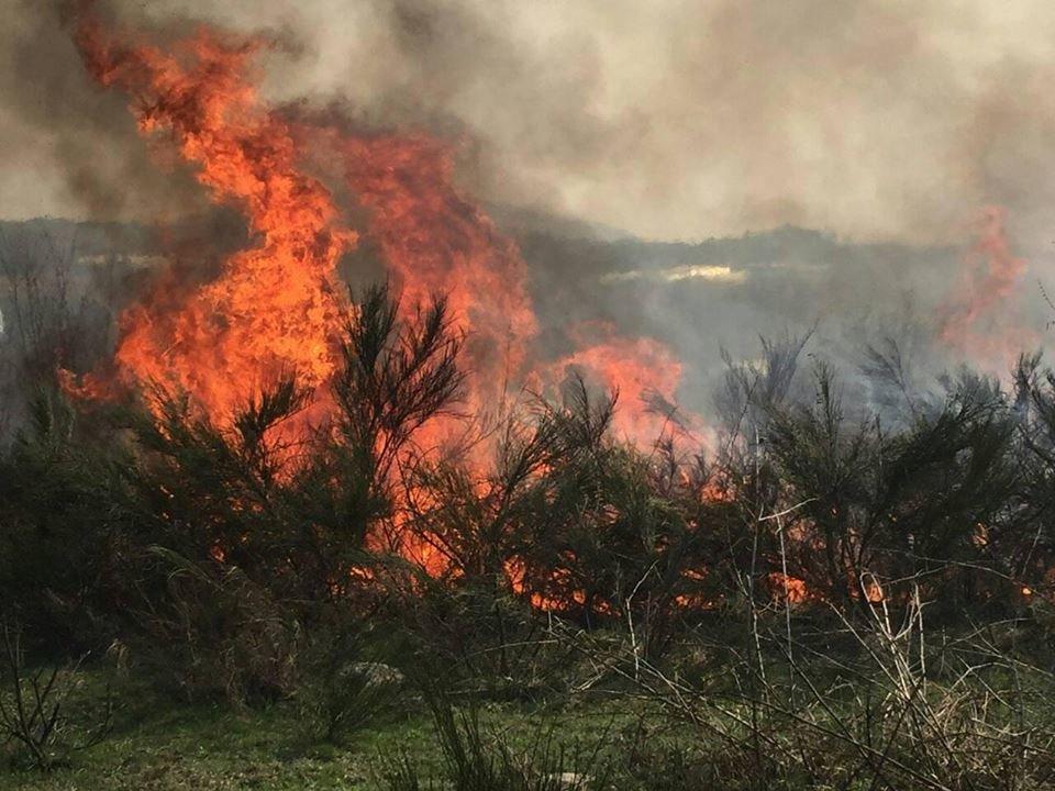 В Закарпатье сжигание сухостоя стало причиной смерти многих живых существ