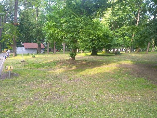 Лето на носу: В Ужгороде прошла «генеральная» уборка парков