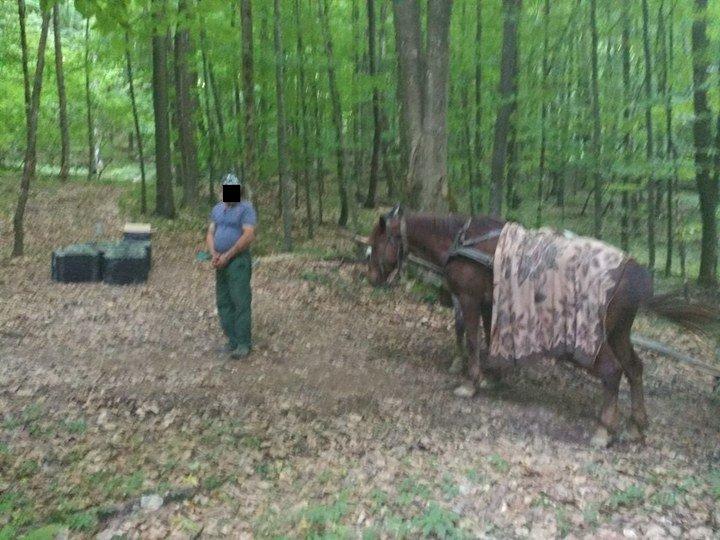 Житель Закарпатья лошадьми пытался доставить контрабандные сигареты в Румынию