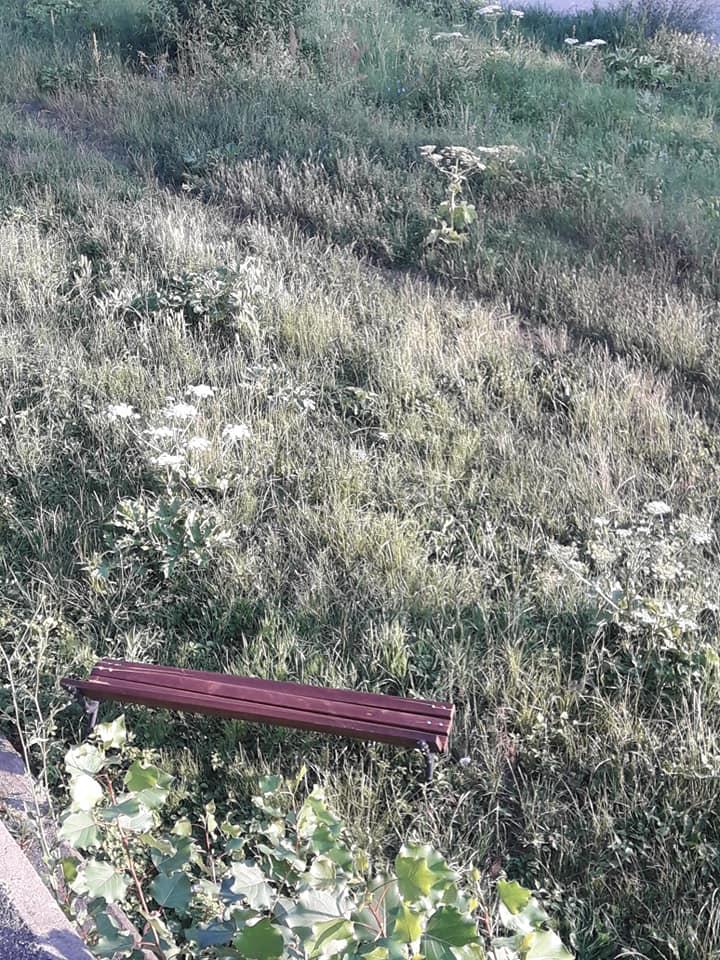 В Ужгороде утром на набережной произошел неприятный случай