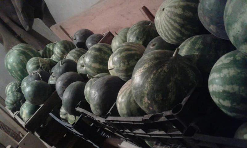 В Закарпатье местная жительница собрала впечатляющий урожай арбузов