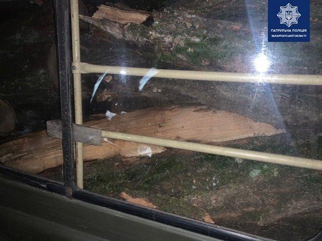 В областном центре Закарпатья местный житель напилил дров в Ботаническом саду