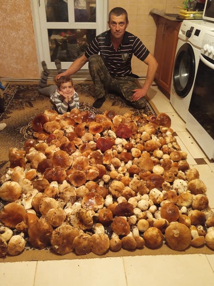 Отвисла челюсть: В Закарпатье семья шокировала соцсети количеством собранных белых грибов