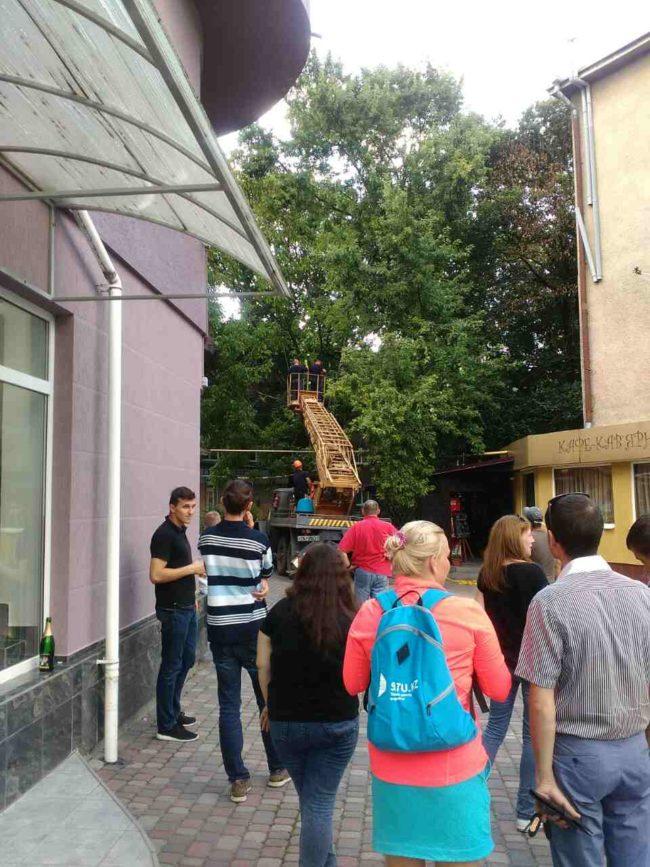 Ужгород. Дерево впало на газопровід низького тиску на вул. Швабській