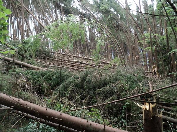Закарпатське ОУЛМГ повідомляє про трагедію в Карпатських лісах