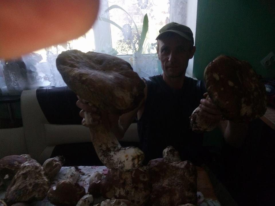 Краяни показали 2-кілограмових грибів-велетнів