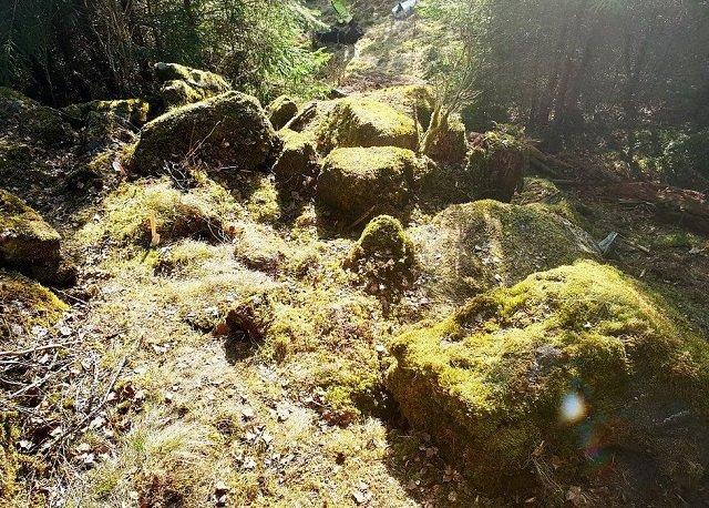 Картограф Томас Карлссон, осматривая лес, заметил металлический блеск.