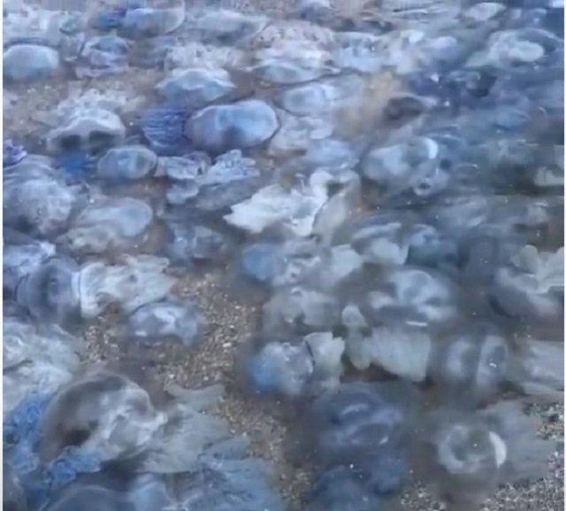Это жесть: Нашествие медуз на популярном курорте в Кирилловке шокировало украинцев