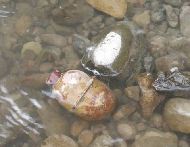 """В Закарпатье местный житель, купаясь в реке, наткнулся на опасный """"сюрприз"""""""