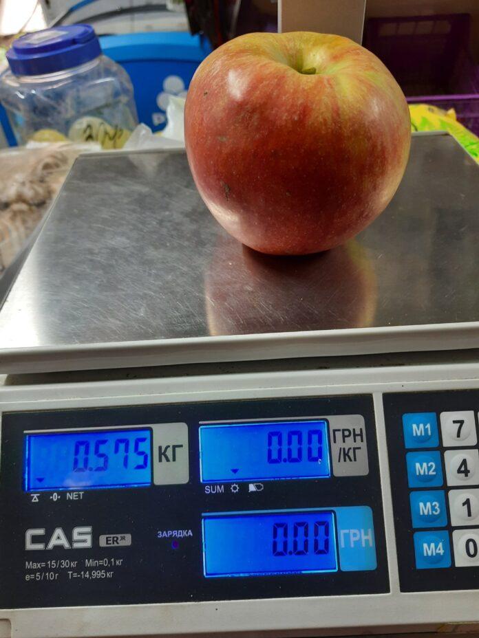 Невероятно! Урожай яблок-гигантов собрали в Закарпатье