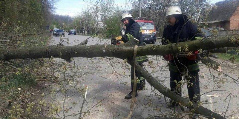 Шквальний вітер із дощем наробив біди на Закарпатті