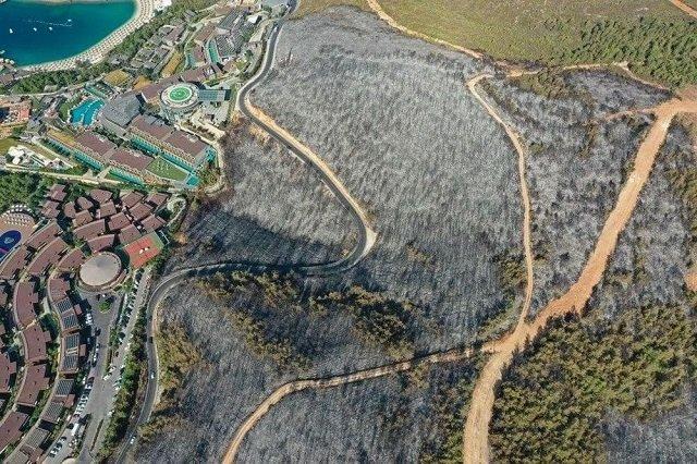 Последствия лесных пожаров в провинции Мугла недалеко от Бодрума