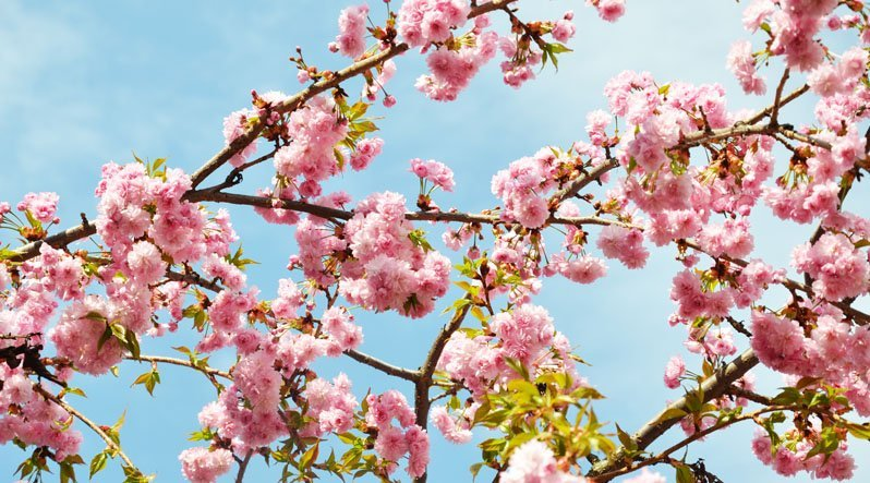 Ужгород — безумовний лідер по залученню туристів у весняне Закарпаття.